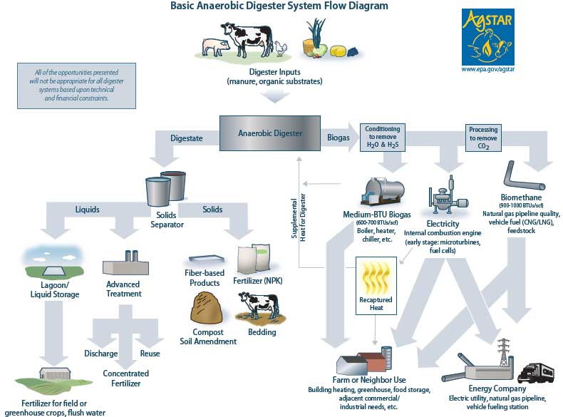 Anaerobic Digestion Sustainable Renewable Energy